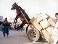archivio vies... carico come un mulo