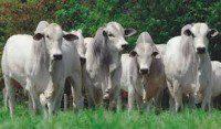 allevamento e reddito agrario (animali al pascolo)