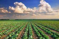 tasse-terreni-affittati-per-usi-non-agricoli