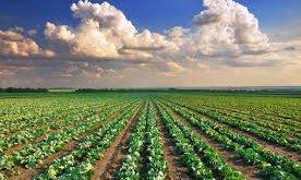 terreno coltivato coltivabile