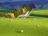 Terreni e campi coltivati