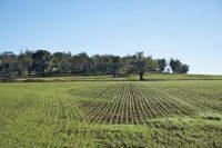 Sai calcolare il valore fiscale di un terreno?